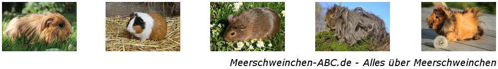 Meerschweinchen-ABC.de